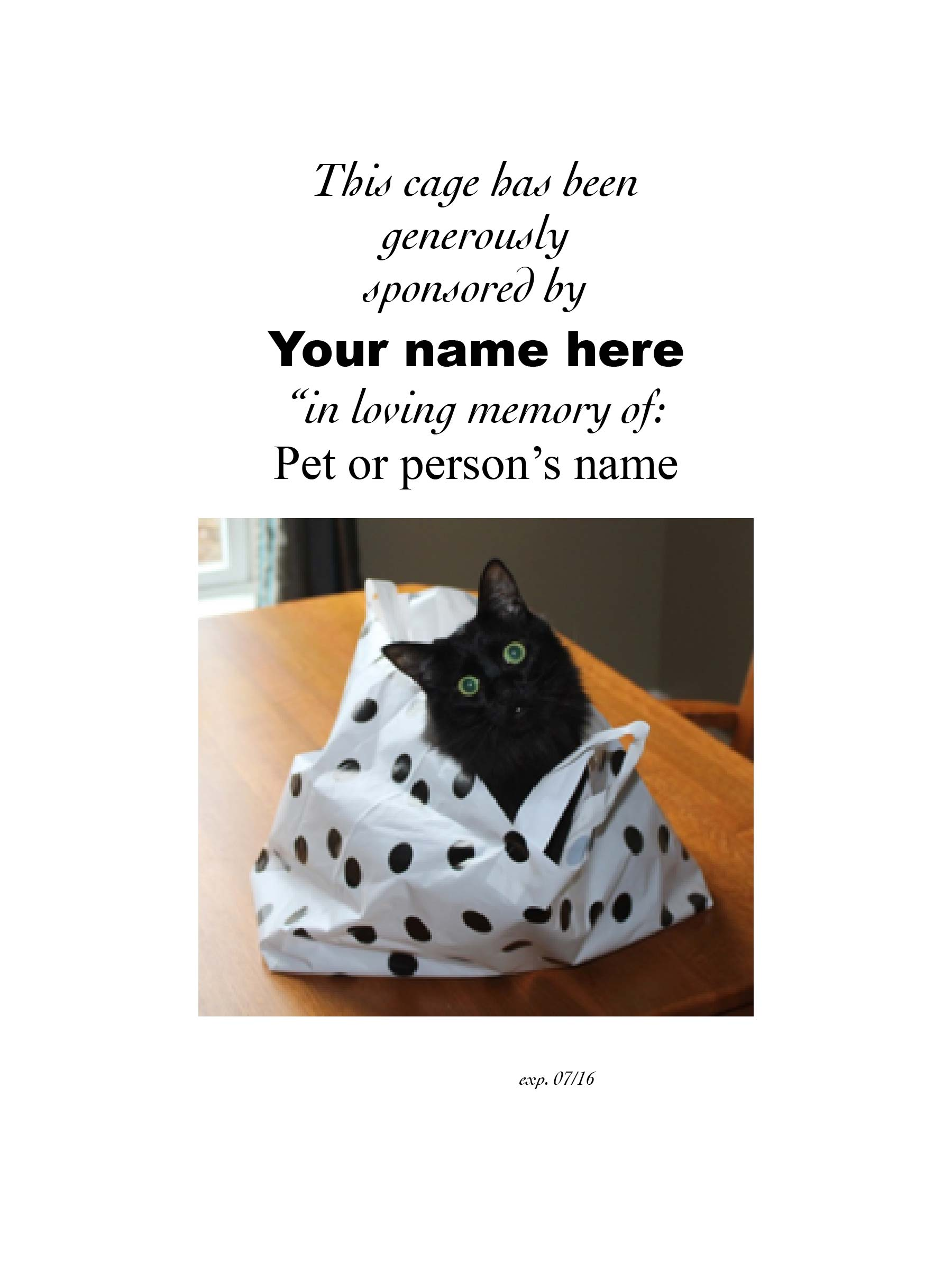 Sponsor a cage - cat picture